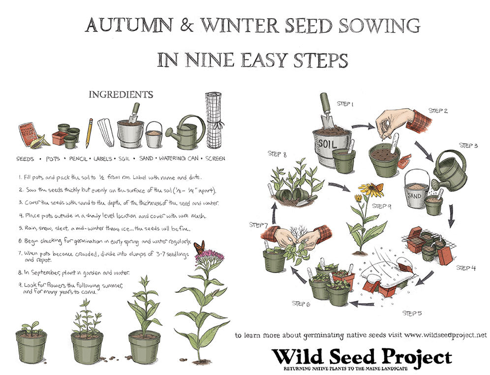 Autumn and Winter Seed Sowing in Nine Easy Steps