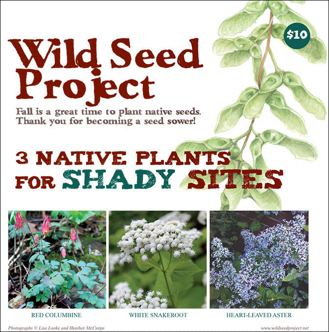 Three Native Plants for Shady Sites