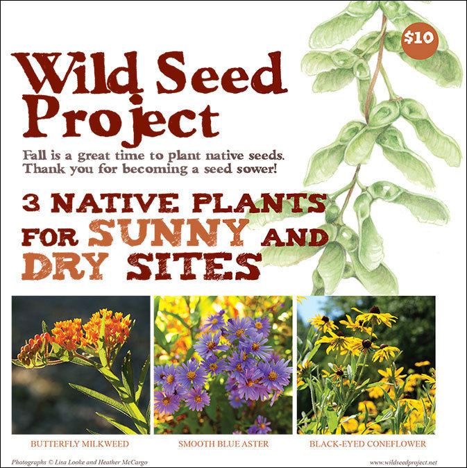 Three Native Plants for Sunny and Dry Sites