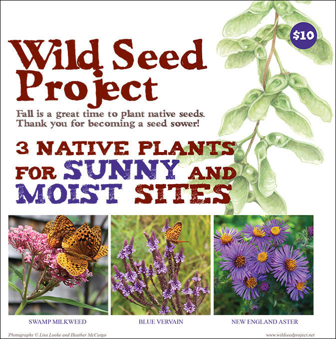 Three Native Plants for Sunny and Moist Sites