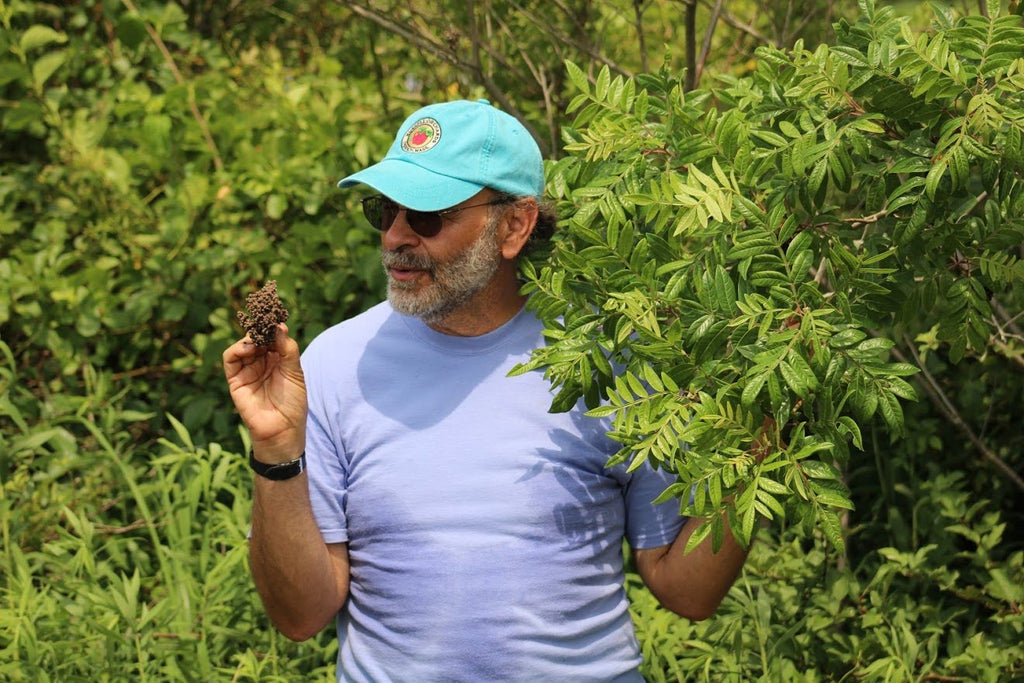 Identifying Edible Wild Foods with Russ Cohen at Viles Arboretum
