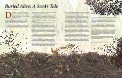 Wild Seed magazine Volume 6 2020: Buried Alive: A Seed's Tale