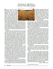 Wild Seed magazine: Portrait of a Bee Plant: Native Wild Blueberry