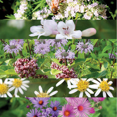 Meadow Wildflower Mix for fall and winter seed sowing