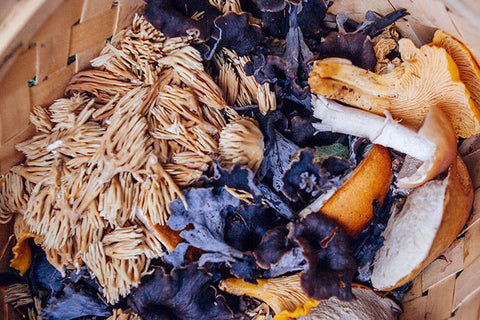 Edible Mushroom Guide: Myths About Mushroom Safety