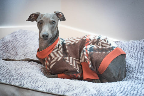 IG London brown Small Italian Greyhound pajamas