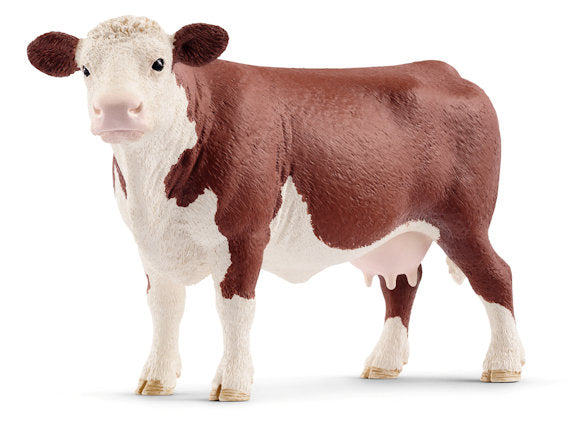 #13867 Hereford Cow