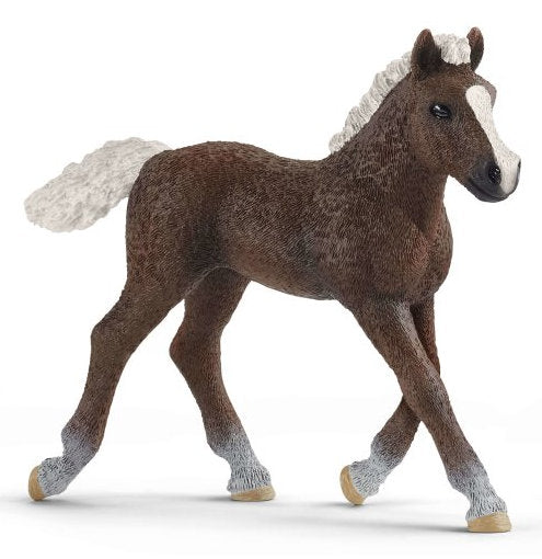 #13899S Black Forest Foal