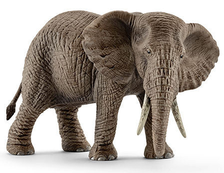 #14761 African Elephant, Female