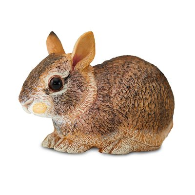 #262129 Eastern Cottontail Rabbit Baby
