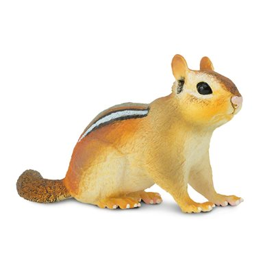 #263029 Eastern Chipmunk
