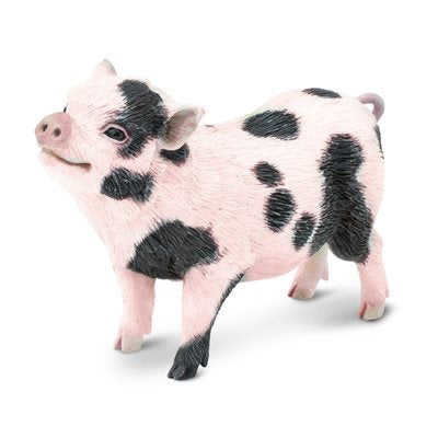 #266029 Pot-Bellied Pig