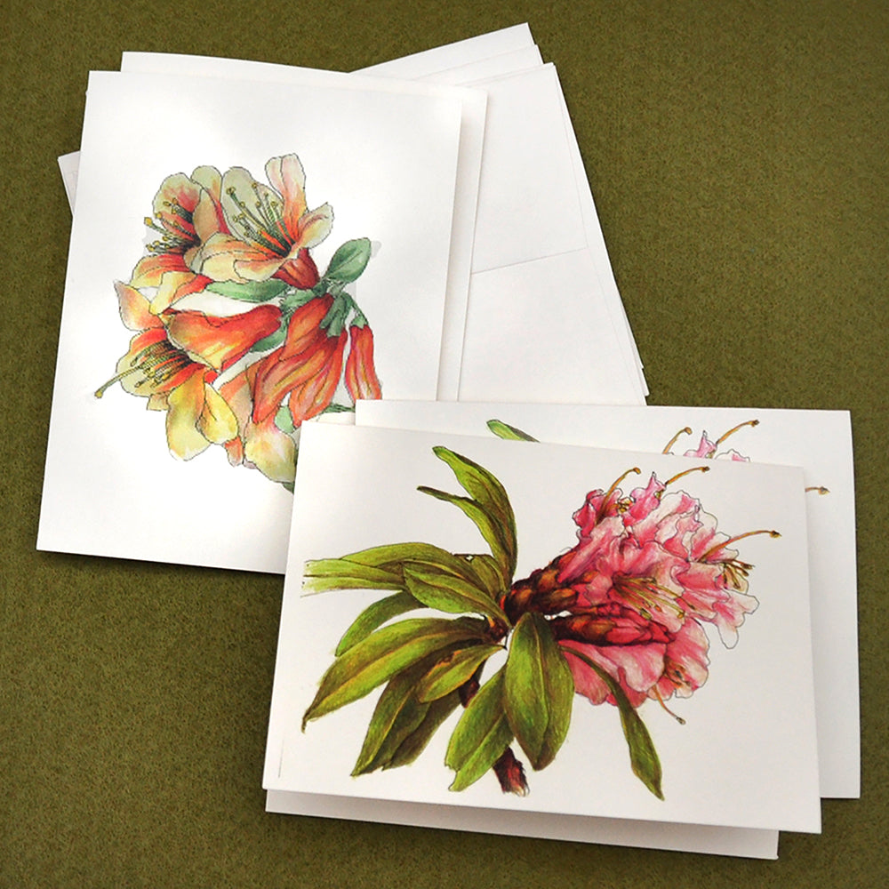 Rhododendrons drawing blank note cards