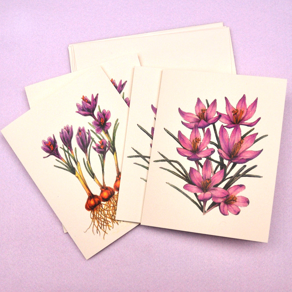 Crocus drawing blank note cards