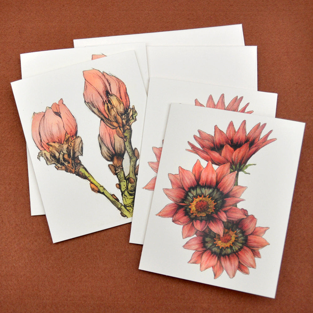Gazania and magnolia drawings blank note cards