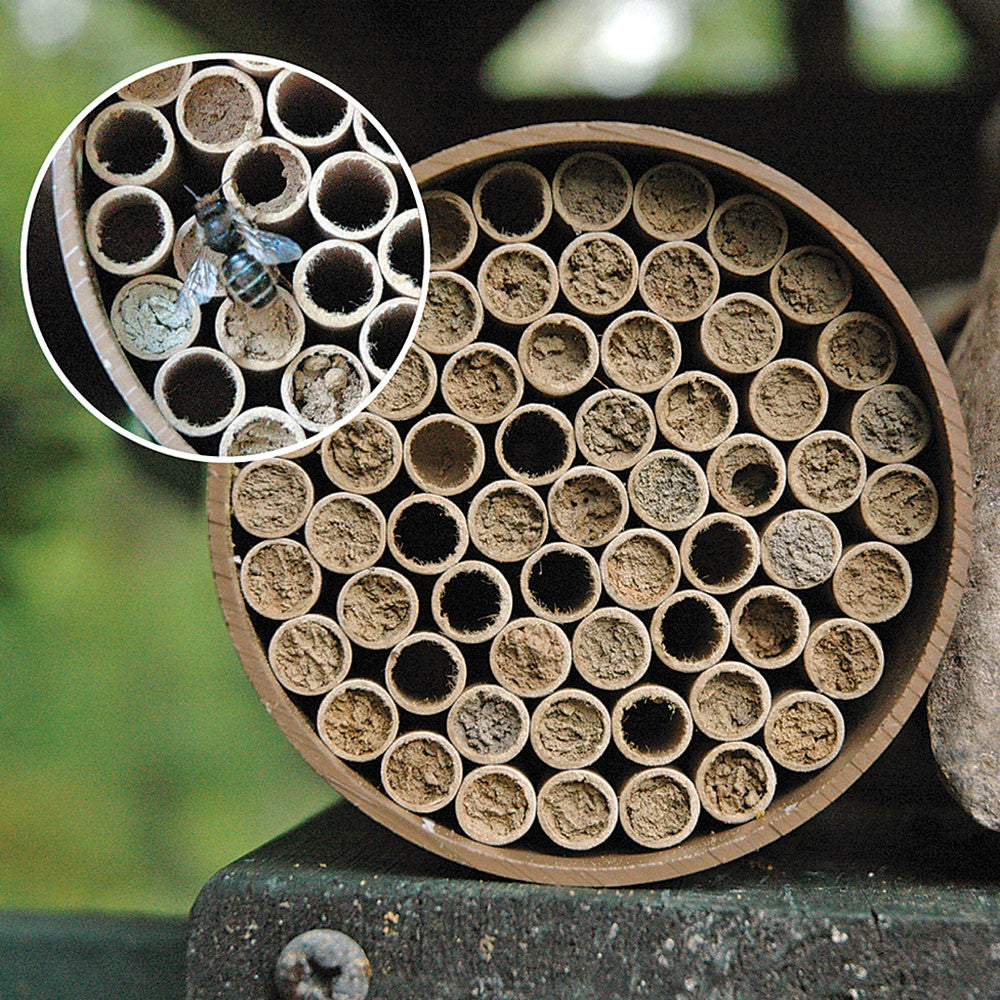 mason bee nest kit - Nova Natural Toys & Crafts - 2