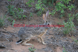 Hare 1 Greeting Card 8X10 Matted Print (5X7 Photo) 11X14 (8X10
