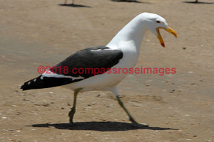 Albatross 2 Greeting Card 8X10 Matted Print (5X7 Photo) 11X14 (8X10