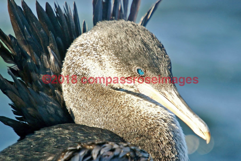Cormorant 2 Greeting Card 8X10 Matted Print (5X7 Photo) 11X14 (8X10
