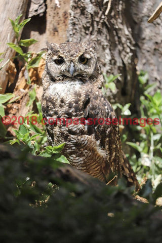Owl 18 Greeting Card 8X10 Matted Print (5X7 Photo) 11X14 (8X10