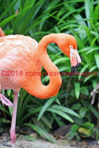 Flamingo 6-Metal Metal - 8 X 10