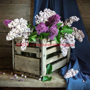 Lilacs in Planter 5-Tiles