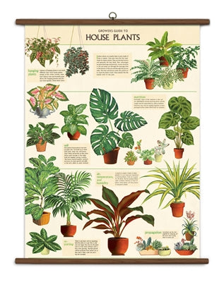"House Plants Vintage School Chart | 40""x28"" - Aspen Lane"