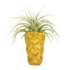 Pineapple Magnet