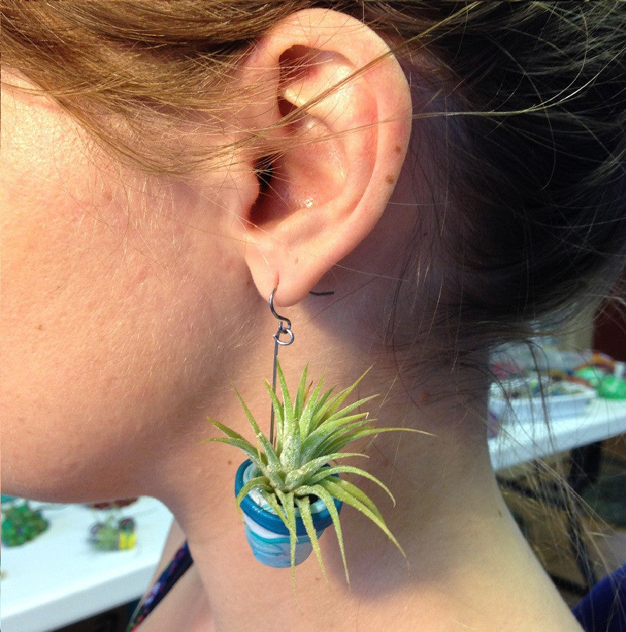 Image result for air plant earrings