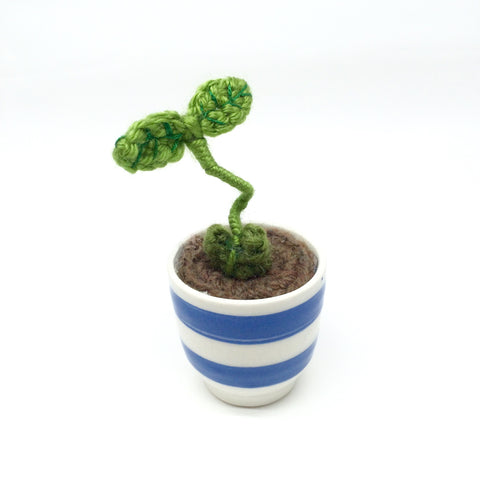 Sprout in Cup