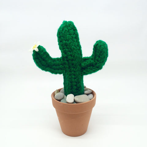 Large Mexican Cactus