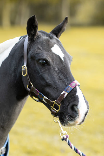 Berry/Navy/Vanilla - Polo Head Collar