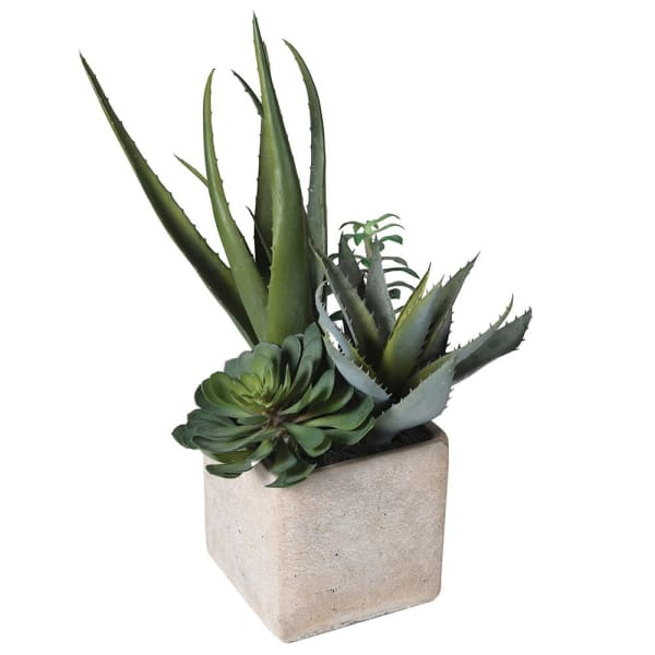 Assorted Cactus in Grey Pot