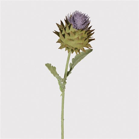 Purple Autumn Thistle