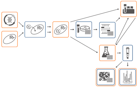 Molecular Biology Cloning Workflow (Partial)