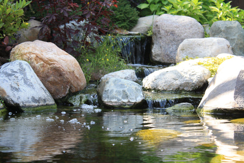 pond using biological filterfalls
