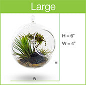 Buy Air Garden Plants Online Toronto Tagged Air Garden
