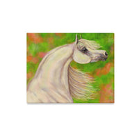 "Classical Grey Arabian 20x16 canvas print Canvas Print 20""x16"""