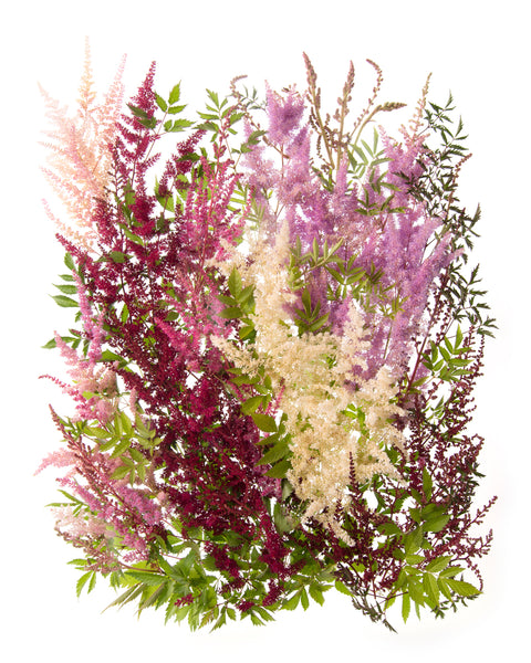 Collected Astilbe Garden