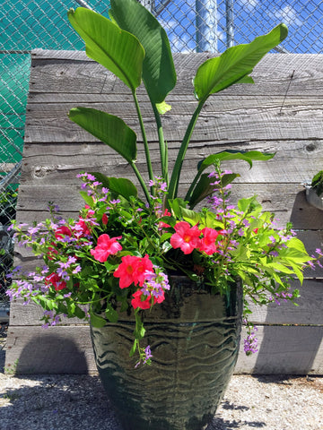 Summer Patio Planter Workshop May 26th