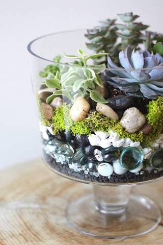 Terrarium Class with Succulents & Air Plants, Evening Session, Wednesday February 27th