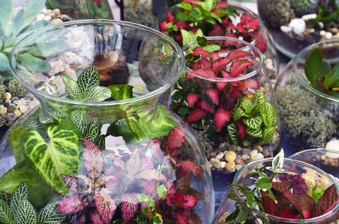 Tropical Terrarium Workshop Fri.May 3rd