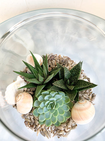 Glass Wood Base Terrarium