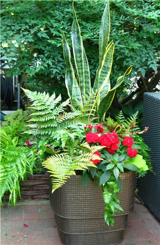 Summer Tropical Planter Sat.June 1st