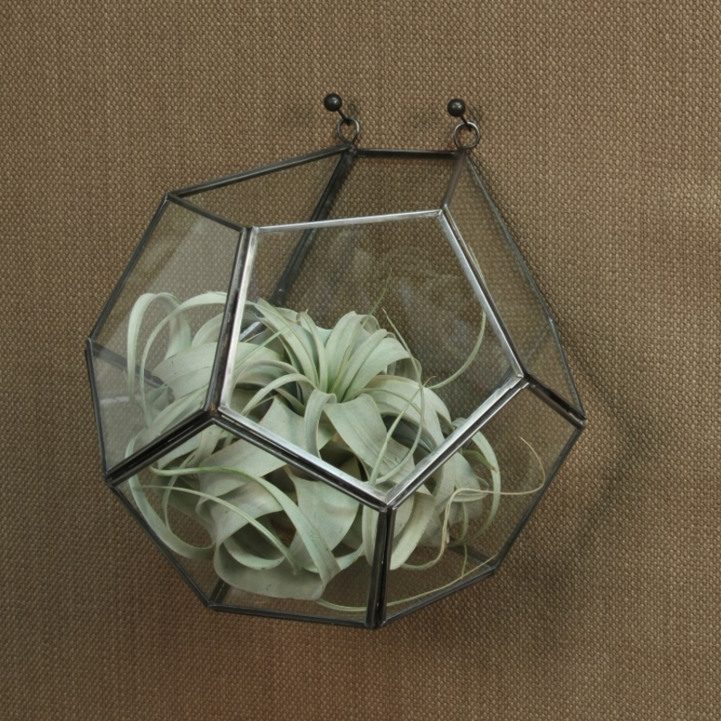 Geometric Wall Hanger Terrarium and Xerographica Air Plant