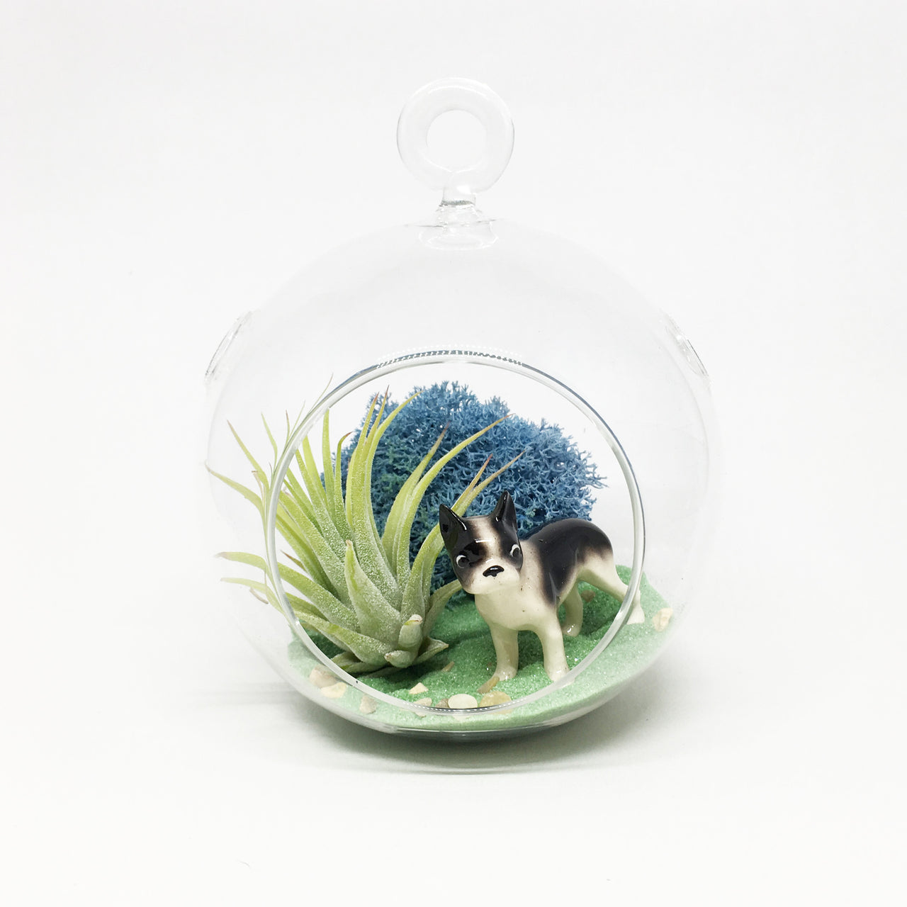 Boston Terrier Air Plant Terrarium Kit