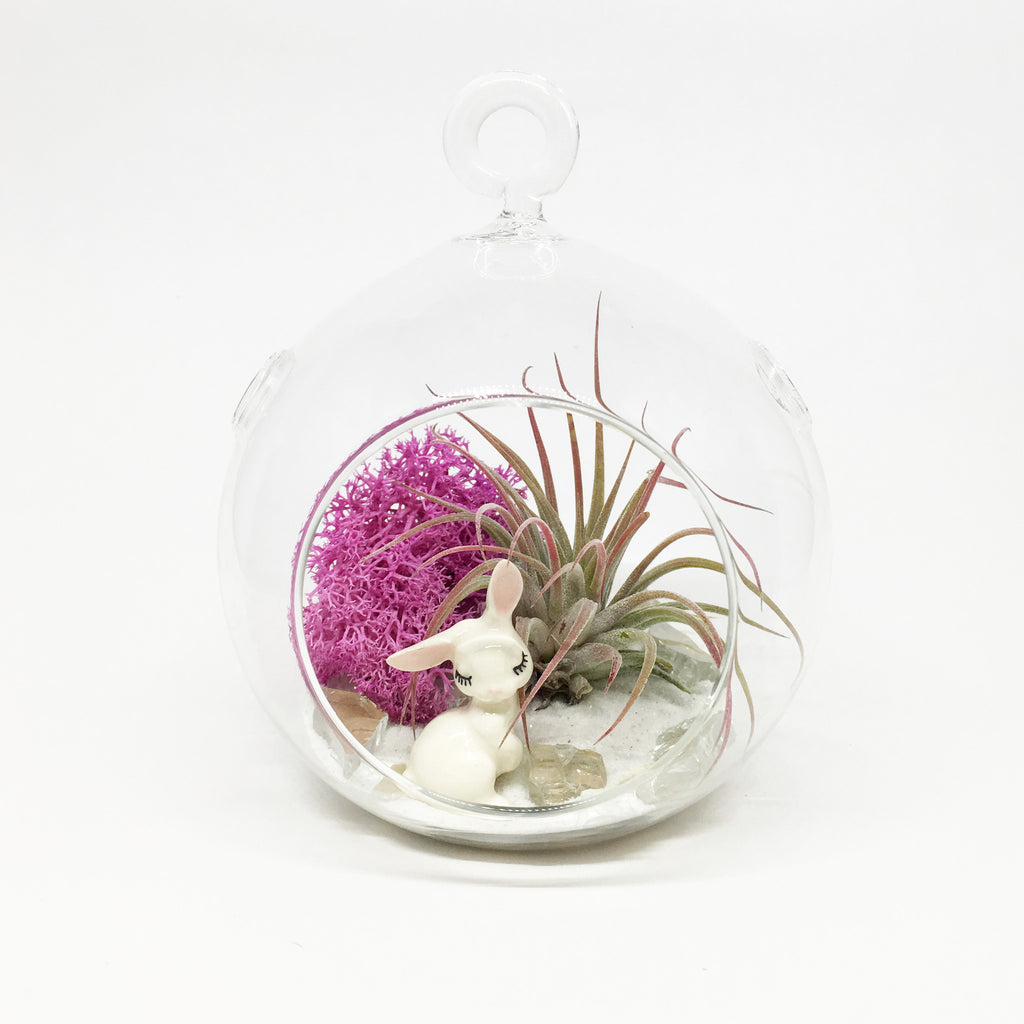 Bunny Air Plant Terrarium Kit