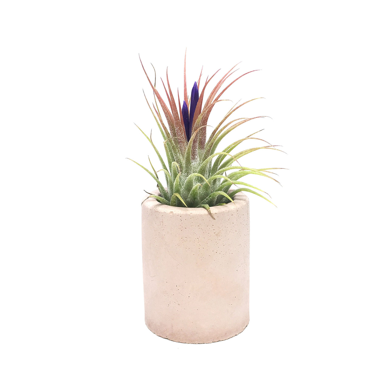 Mini Concrete Pot Air Plant Display
