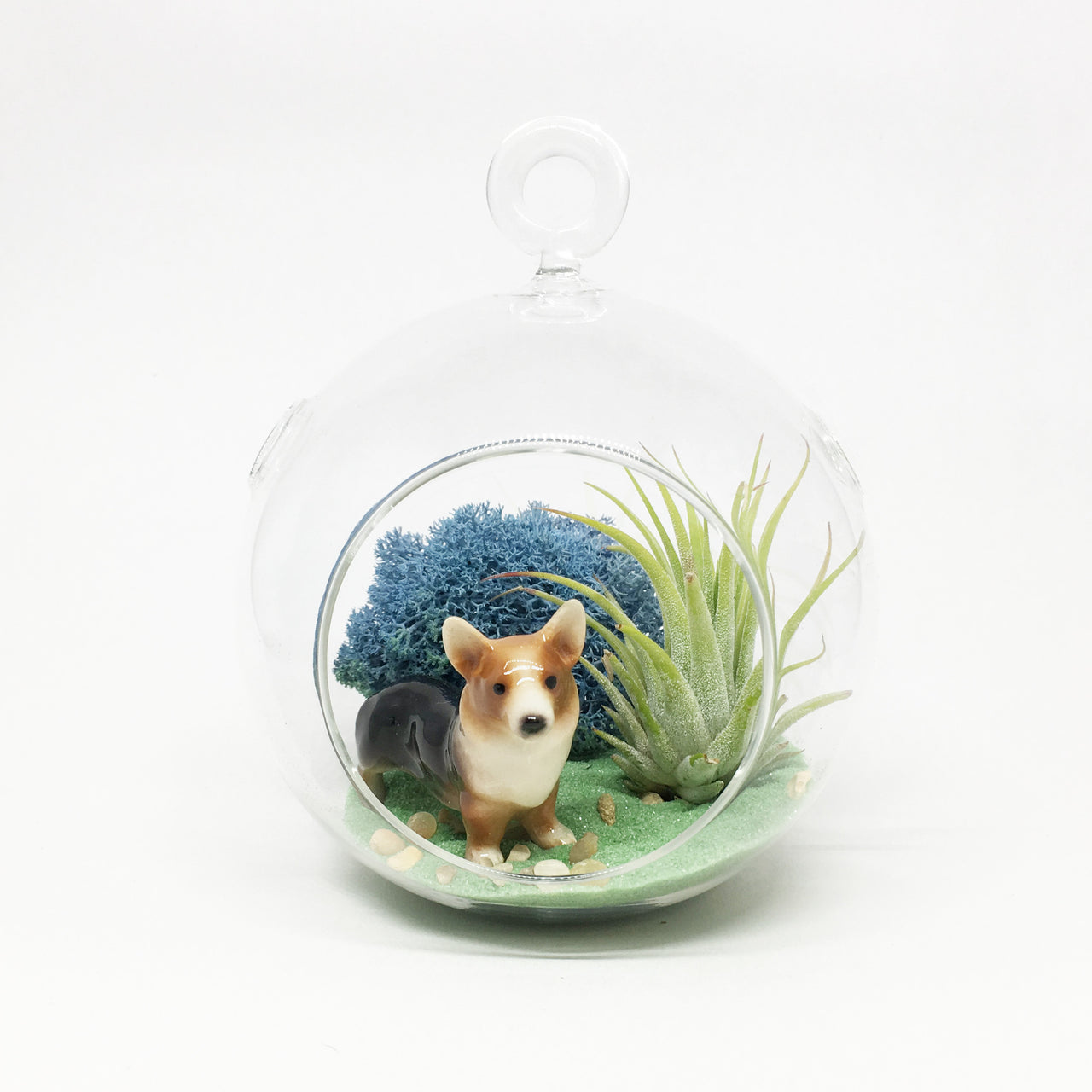 Corgi Air Plant Terrarium Kit