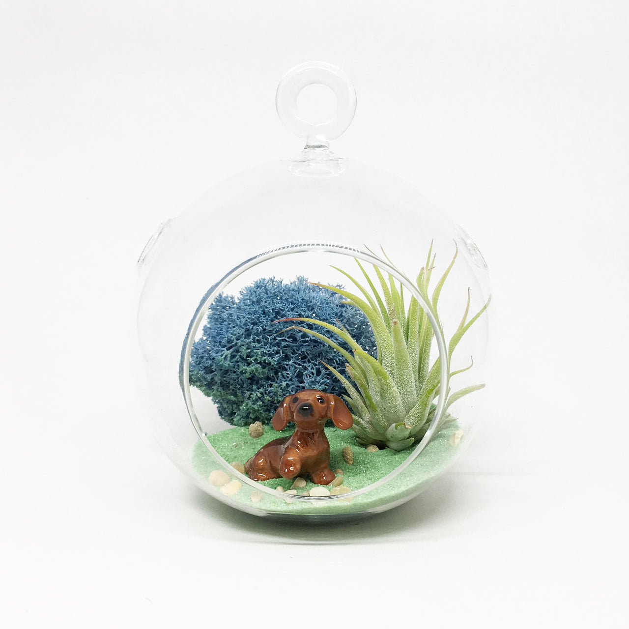 Dachshund Air Plant Terrarium Kit
